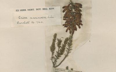 Oldest specimen in the National Herbarium