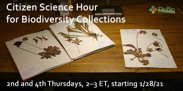 [HERBARIA] New Citizen Science Hour for Biodiversity Collections webinar series