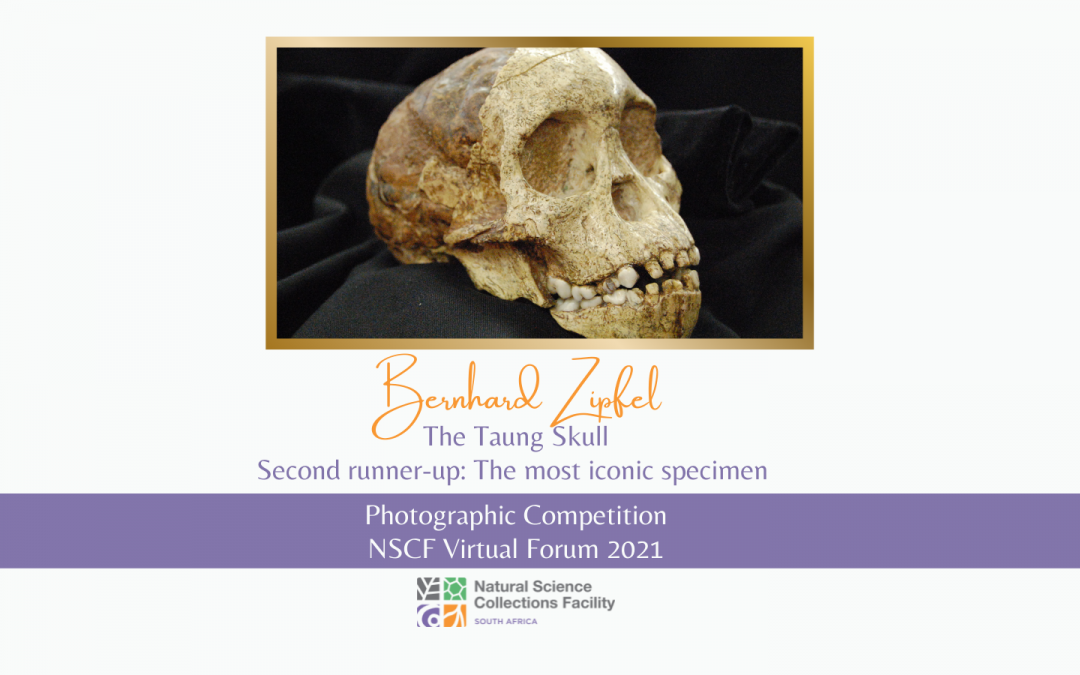 The story of the discovery of the Taung Skull